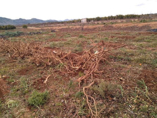 extracción de troncos