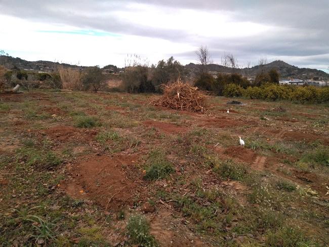 extracción de troncos Valencia