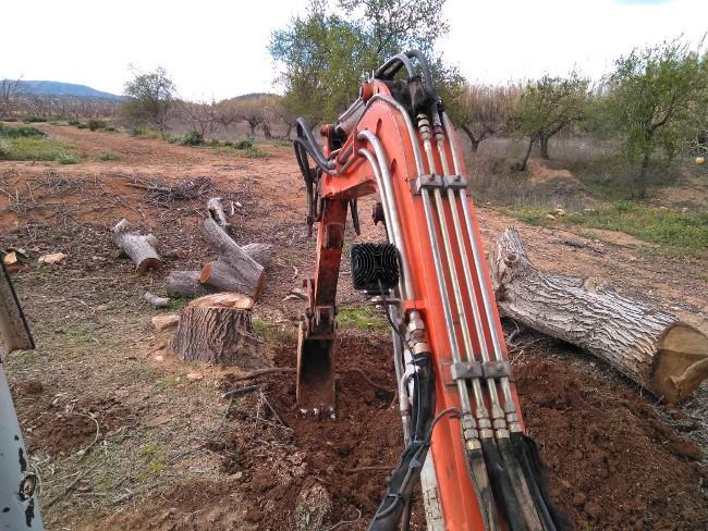excavación de troncos
