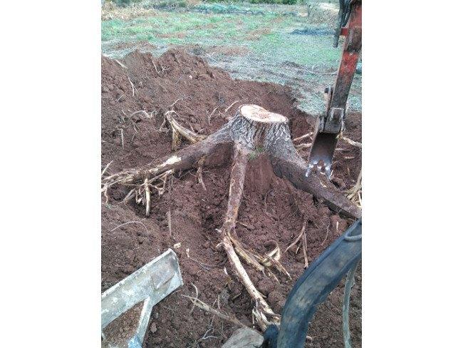extracción tocones raíz