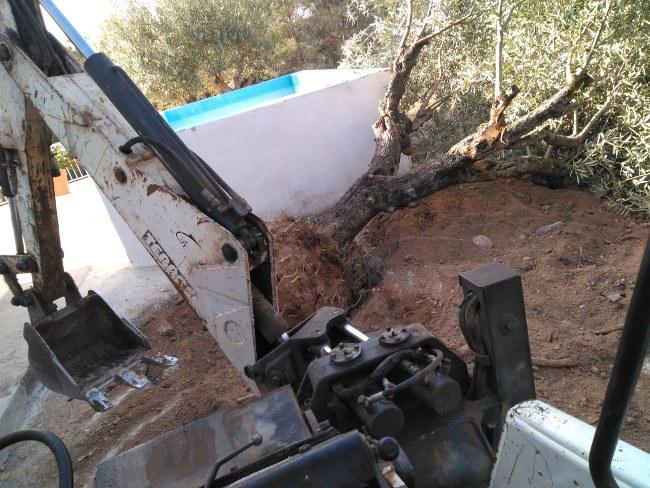 replantación arboles Valencia